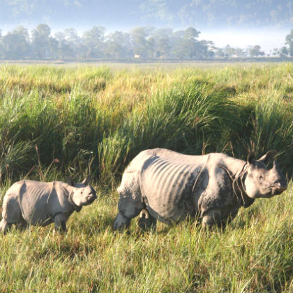 Northeast India Wildlife Tour