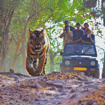 Tiger Safari Tour India