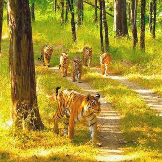 Wildlife Tours in India